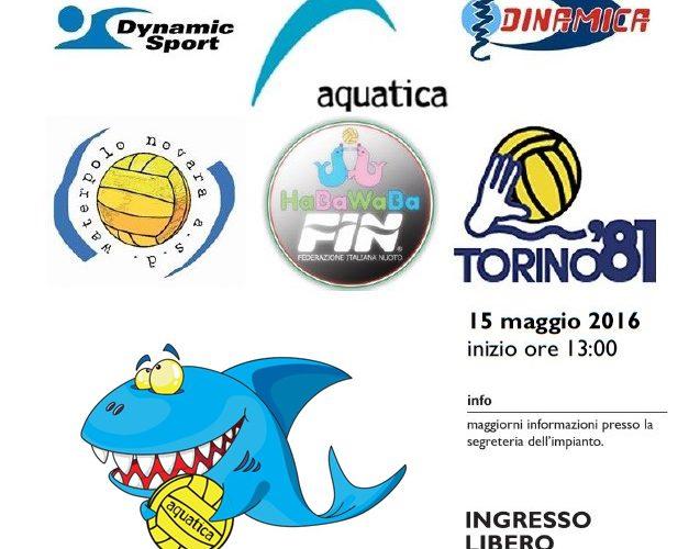 torneo societario fin-habawaba 15 maggio 2016 aquatica (1)